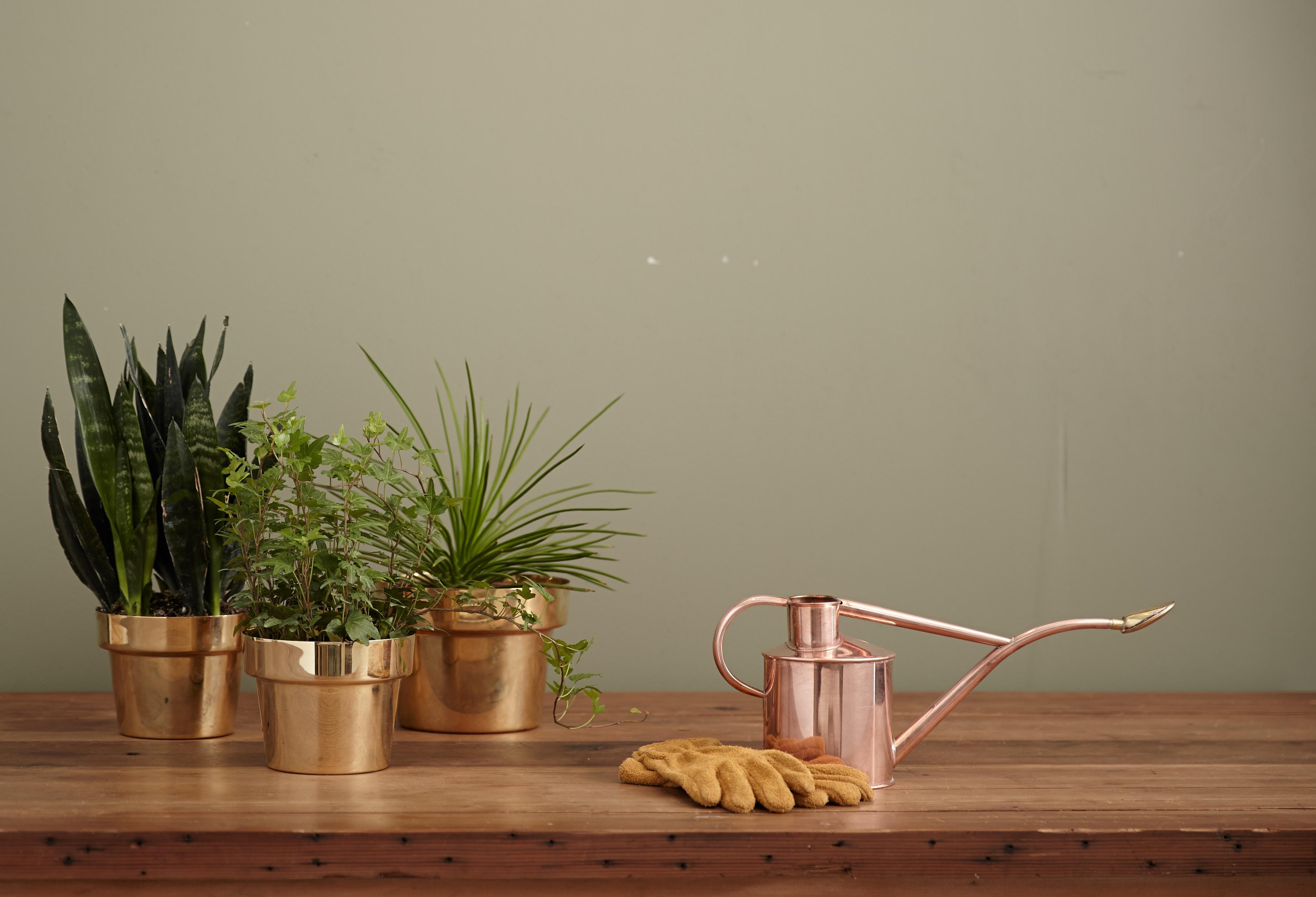 Plantes au travail